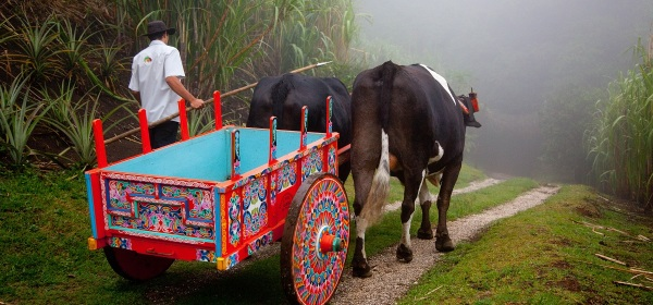 Boyero with his oxcart in Costa Rica