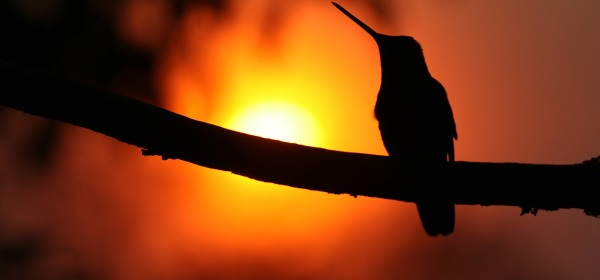 A hummingbird at rest in Costa Rica